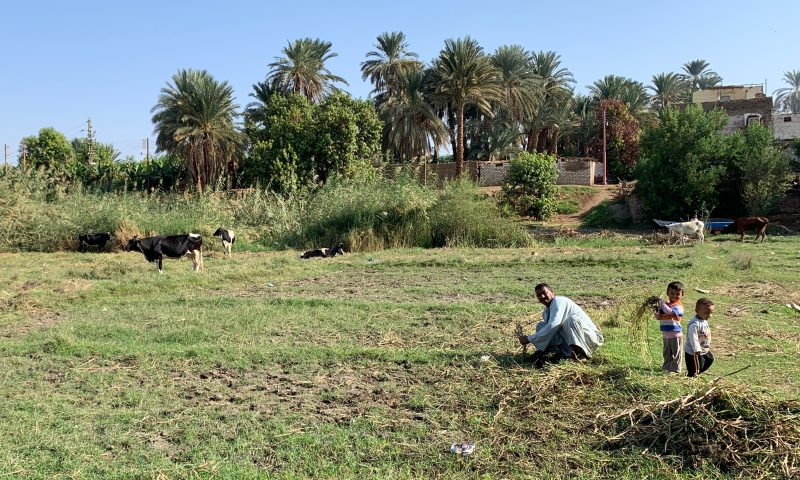 A farmer and his sons at the Island of Besaw in Egypt prepare the land for agricultural production.